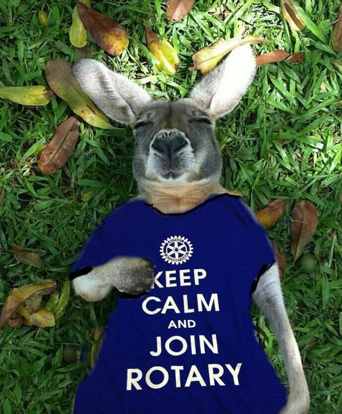 Have fun telling Rotary's story and sharing our new visual identity. This kangaroo is promoting Rotary, just in time for our 2014 Convention in Sydney, Australia. #rotarystory