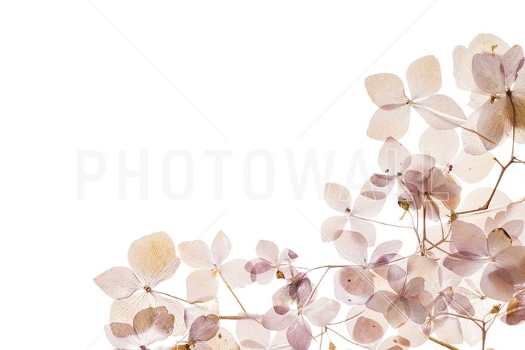 Light Flowers - Fototapeter & Tapeter - Photowall