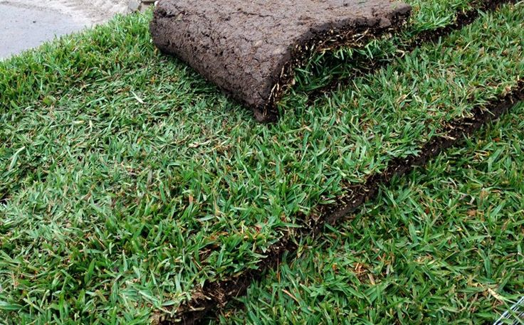 Installation of your lawn - How to guide - Putting down your instant turf   Lilydale Instant Turf   Love your lawn   Great grass   Lily & Dale   Follow us   Garden Tips & Advice   Contact us   Lawn Solutions Australia