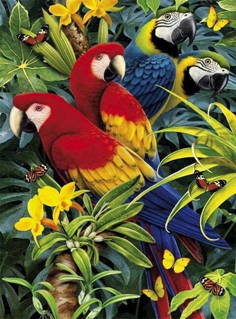 Scarlet and Blue and GoldMacaw Parrots