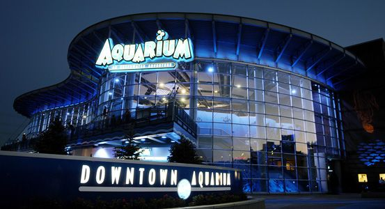 The Downtown Aquarium mixes family fun, upscale casual dining and spectacular marine life in Denver.
