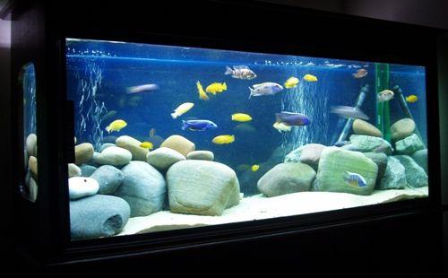 African cichlid aquarium african cichlid aquarium images for Koi fish tank setup