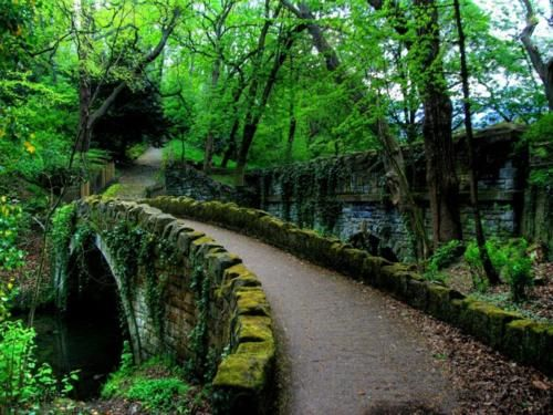 Jesmond Dene Bridge, Newcastle Upon Tyne, England - Look at how green it is there!  Visiting England is a must do for me some day.