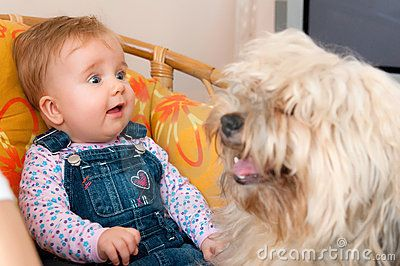 Cute baby girl with long haired pet dog.