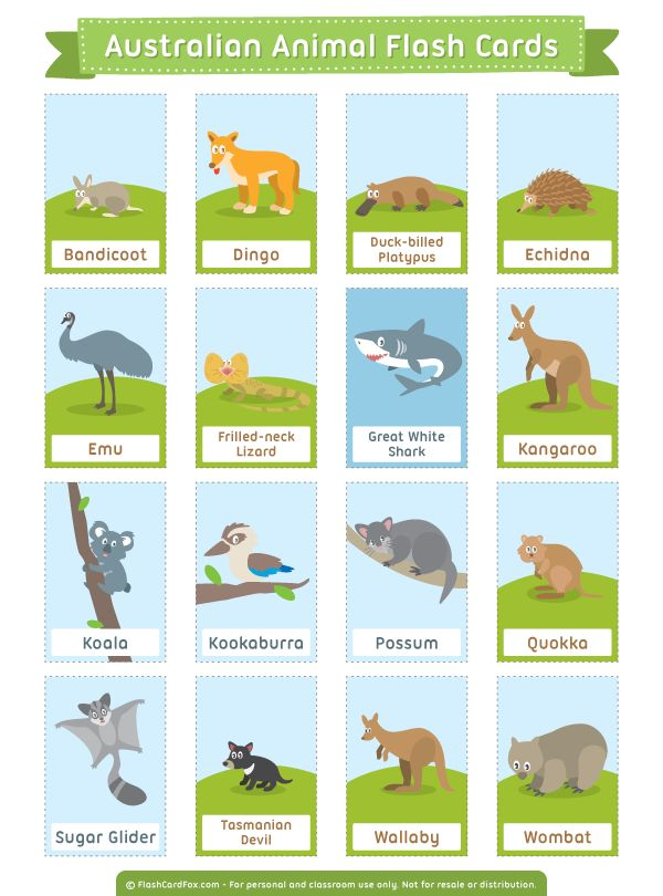 Free printable Australian Animal flash cards. Download them in PDF format at http://flashcardfox.com/download/australian-animal-flash-cards/