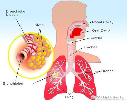 emedicinehealth: Upper Respiratory Tract Infections-Get Facts about Symptoms