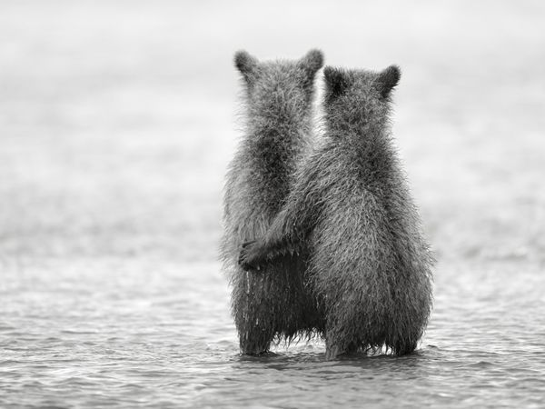 LOVE. Two year old sister and brother cubs are waiting alone for their mom to return from salmon fishing.    Photo and caption by Nikolai Zinoviev: Photos, Animals, Quotes, Nikolai Zinoviev, Bears, Friend