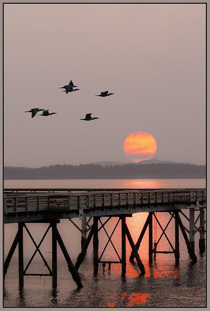 Sunrise at Sidney-By-the-Sea, - via: crescentmoon06: - Imgend