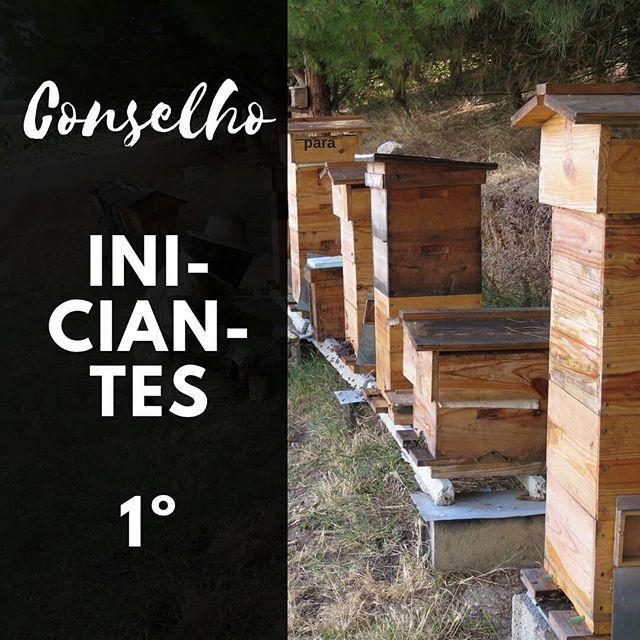 """Conselho para iniciantes na apicultura. #apicultura 1º - Comece por aprender o maximo possivel da história natural da abelha. E ao ler os manuais tem que se perguntar - """" O que estou a fazer ou a aprender é bom para as Abelhas?"""" - ou - """" isto irá mudar o caminho natural da vida da abelha"""". #apicosta #apicultura #apiculturanatural #apiculturaeficiente #abelhas #bees #beekeeping  #Regram via @apicosta"""