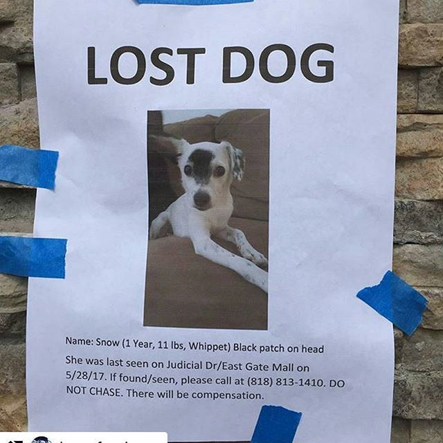 @Regrann from @furanimals17 -  #Repost @boosfambam (@get_repost) ・・・ 🆘🆘🆘🆘LOST DOG IN LA JOLLA/SAN DIEGO AREA🆘🆘🆘 Please read above👆👆 #lostdog #sandiego #lajolla #puppy #dog #help #pleaseshare #network #gethimhome #getherhome #founddog #california #regrann #lajollalocals #sandiegoconnection #sdlocals - posted by Iggy Angel aka mustlovedogz54  https://www.instagram.com/mustlovedogz54. See more post on La Jolla at http://LaJollaLocals.com
