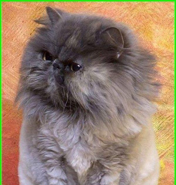 34 Gambar Kartun Kucing Anggora 5000 Gambar Kucing Lucu Imut Dan Paling Menggemaskan Download Kumpulan Gambar Kucing Yang Meng Kucing Gambar Kartun Kartun