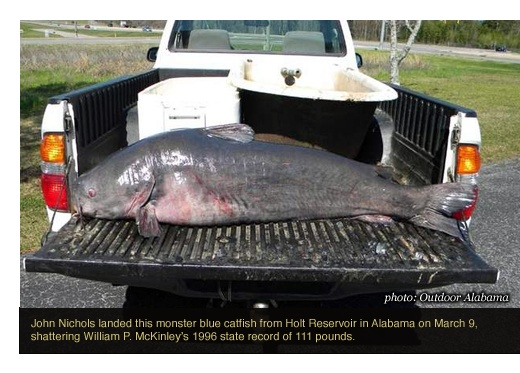 Apr 11 the alabama blue catfish record has been shattered for Best time to fish for catfish