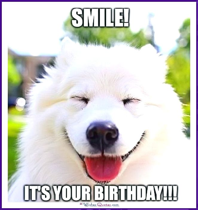 Funny Dog Birthday Meme: Smile it's your birthday!
