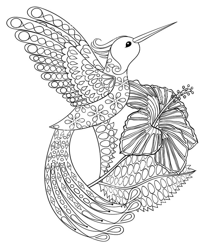 Adult Hummingbird Coloring Pages