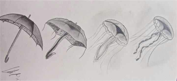 metamorphasis - umbrella to jelly