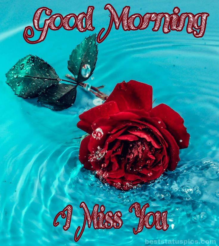 31+ Good Morning Romantic Rose Flower Images Whatsapp Dp