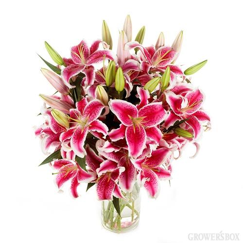 lovely flowers: Beautiful Flower, Lilies Mi Favorite, Stargazer Lilies Mi, Favorite Things, Favorite Flower Stargazer, Stargazer Lilies If, Flower Stargazer Lilies, Lilies Bouquets, Lilies 3