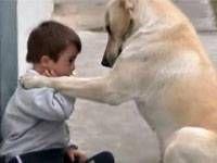 [VIDEO] Lihat Kegigihan Anjing Super Lembut Ini Mengajak Anak Down Syndrome Bermain