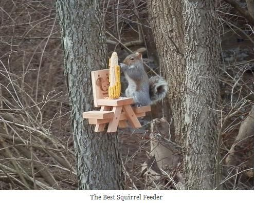 Haha we need this for earl and pearl our squirrels =)