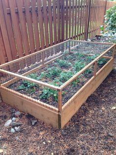 Une cage à fraises, très pratique pour les protéger de l'appétit des rongeurs. …