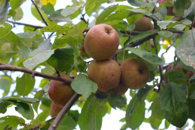 Brot backen, Danke sagen, Äpfel pflücken: 3 Ideen, wie wir die spätsommerliche Kraft der Natur für uns nutzen können