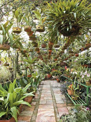 Marie Titz Kaufmann, presidente do Clube Paulista de Jardinagem, reservou para o orquidário um lugar especial em seu jardim de 500 m²: a estufa de 10 x 6 m, com estrutura de ferro, feita por um serralheiro.