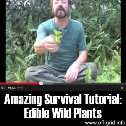 Amazing Survival Tutorial - Edible Wild Plants