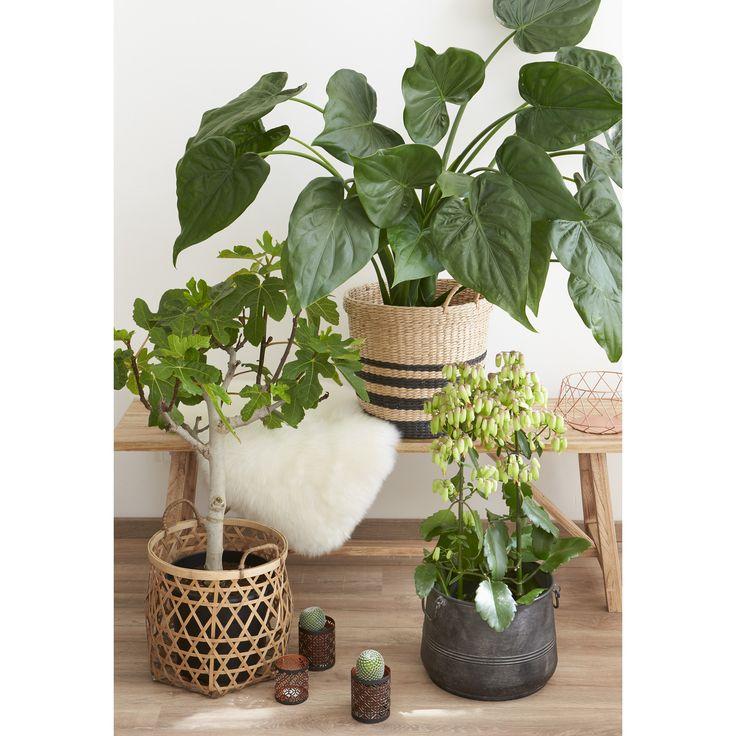 Ook in de winter kun je groen in huis halen. Tip: gebruik manden en potten als plantenbakken! #groen #planten #botanisch #woonkamer #manden #diy #kwantum