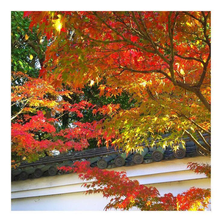 📍#東福寺 🍁 去年より早めやったけど 結構、赤くなってたなぁー🙆🏻✨ ・ #寺 #temple #紅葉 #もみじ #coloredleaves #beautiful #view #happy #holiday #happyholiday #happytime #enjoy #秋 #Autumn #🍁 #京都 #kyoto #japan #🇯🇵 #throwback #20171112