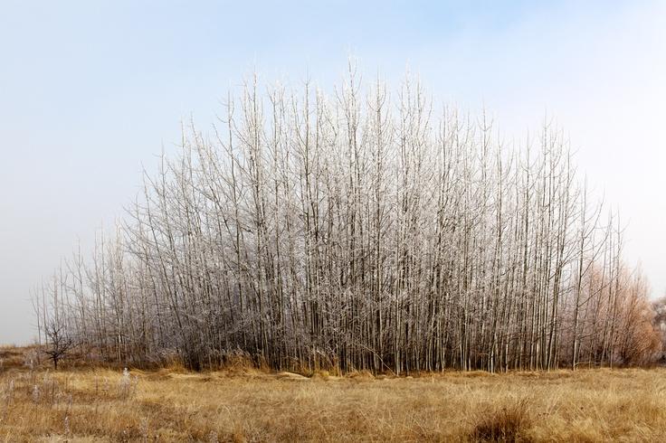 Alessandro Cerutti Photographer // | Frozen Trees
