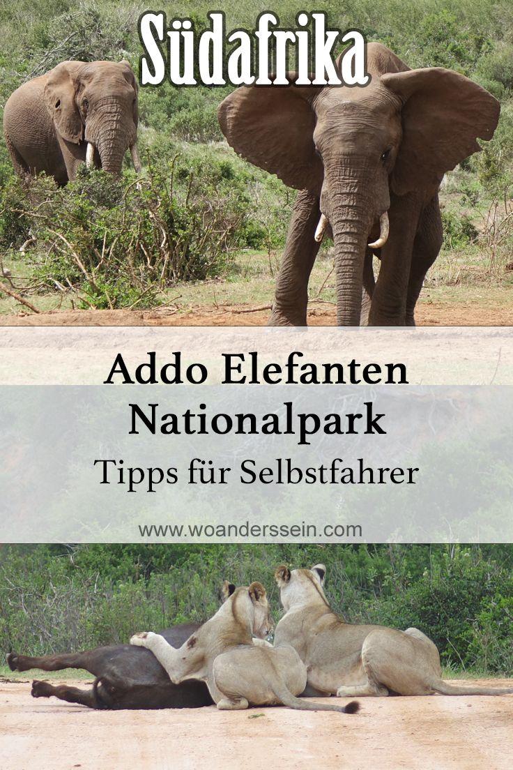 Auf Safari im Addo Elefanten Nationalpark, Südafrika. Unsere Erfahrung als Selbstfahrer zusammengefasst.