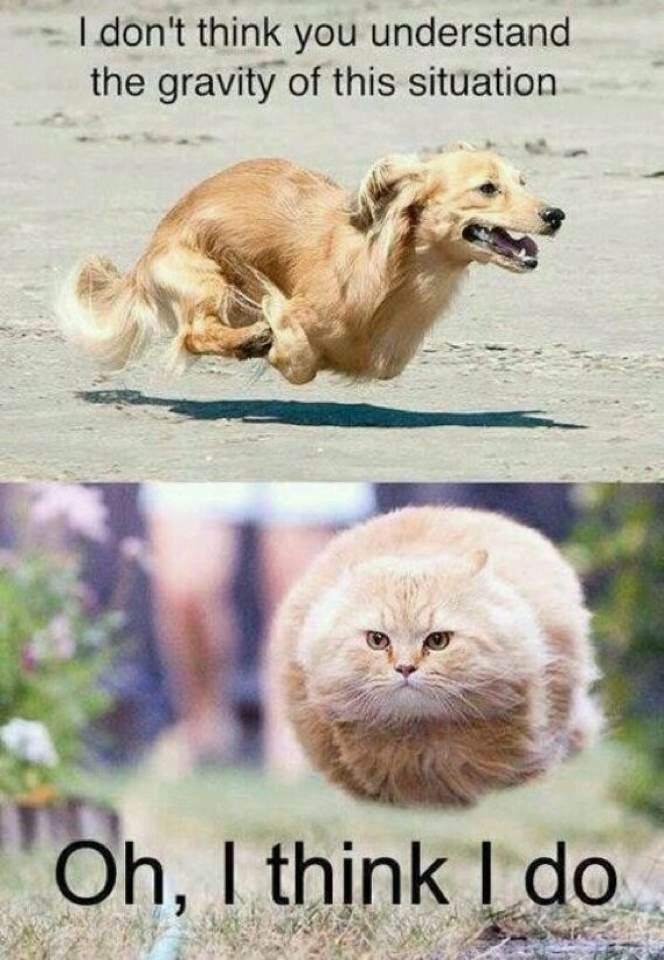 Hahahahahahahhaahhaahhaha I can't breathe!!!!!!!! See our library of fun cat videos at http://homegardenguide.co.uk/listing-category/cat-videos/