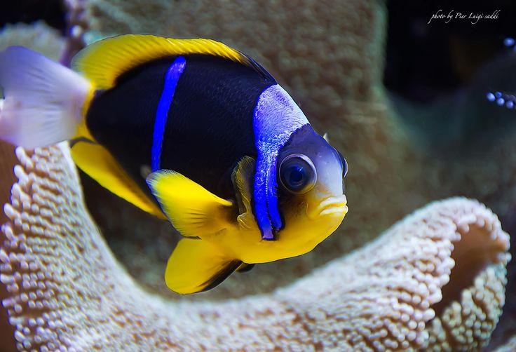 Photo poisson par Pier Luigi Saddi sur 500px
