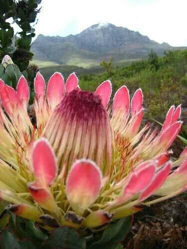 África-Sul.