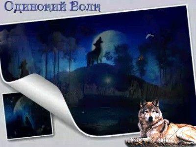 magányos farkas