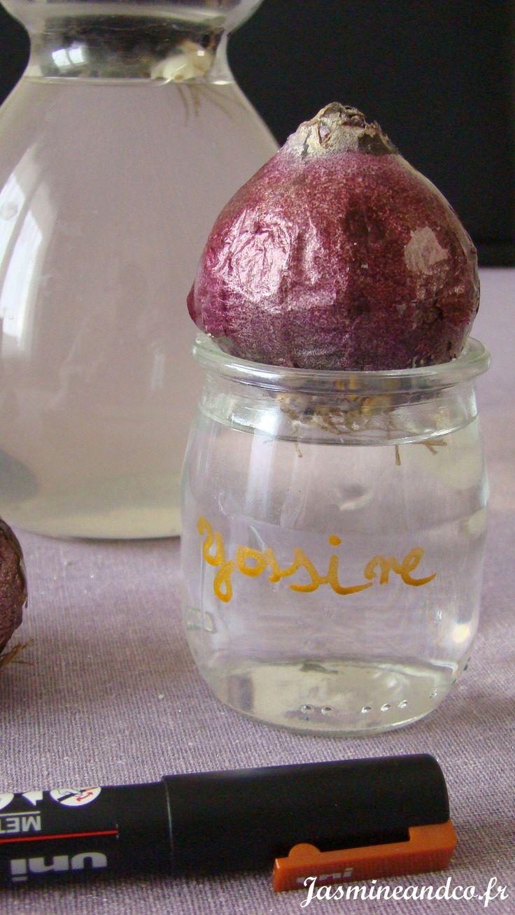 Les 25 meilleures id es concernant bulbe jacinthe sur pinterest bouquet de jacinthe bulbes et - Faire pousser des endives dans l eau ...