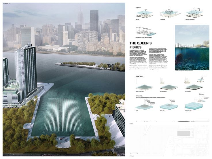 """ THE QUEEN S FISHES "" - NYC Aquarium competition finalist"