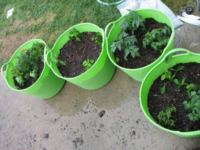 Get some cheap plastic buckets at target $6.00 each, drill holes in the bottom and then fill with rocks at the bottom, fill with soil and plant your plants.