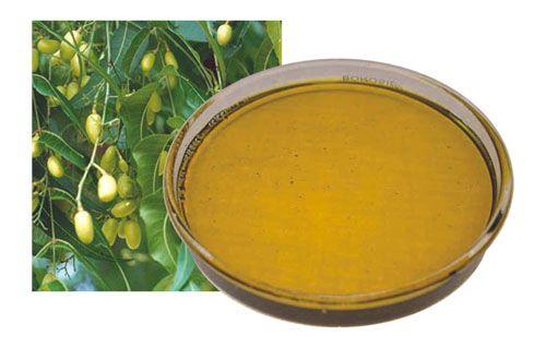 El aceite de NEEM es también conocido con el nombre de aceite de NIM. Desde tiempo inmemorial se utiliza en la medicina Ayurveda. También en...