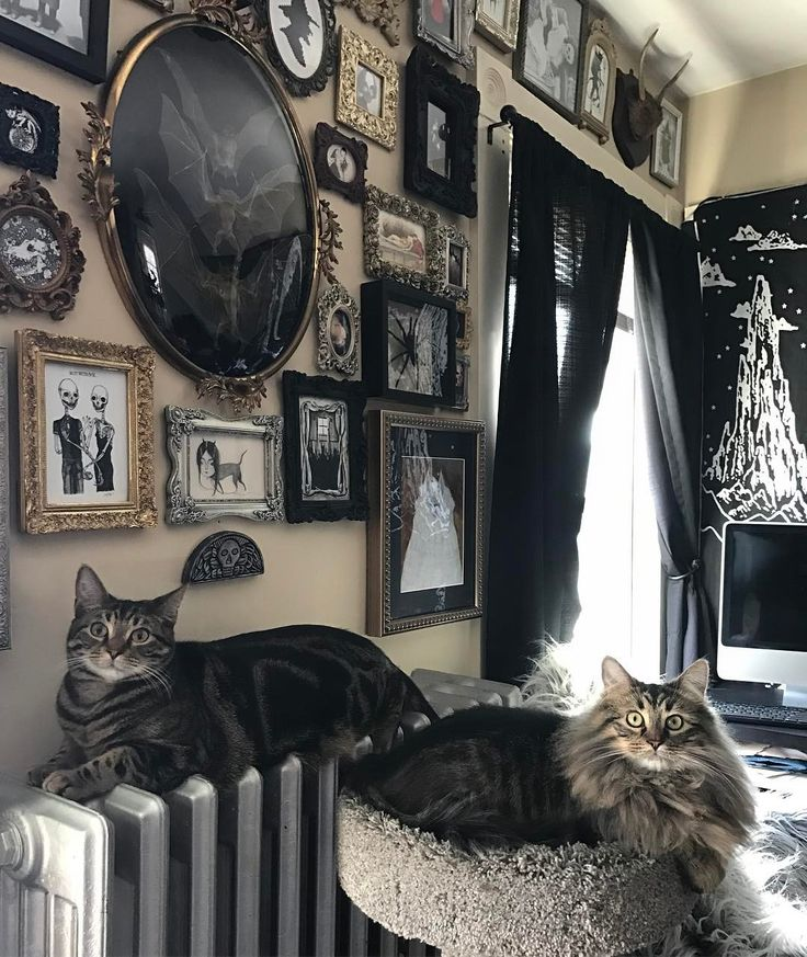 """2,253 Likes, 32 Comments - Chandra GoreWitch ✨ (@lifeisapigsty) on Instagram: """"Here's another picture of my kitties in front of this wall ✨"""""""