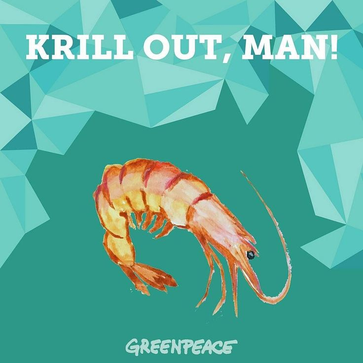 Join our Krill-Pun-Challenge: Don't krill my vibe! Better tell us your favorite KRILL PUN - the 10 best puns will win a Greenpeace KeepCup!  #creative #pun #puns #joke #words #challenge #contest #krill #animals #antarctica #keepcup #greenpeace #globalwarming #sanctuary #ocean #whale #whalefood #whalesofinstagram