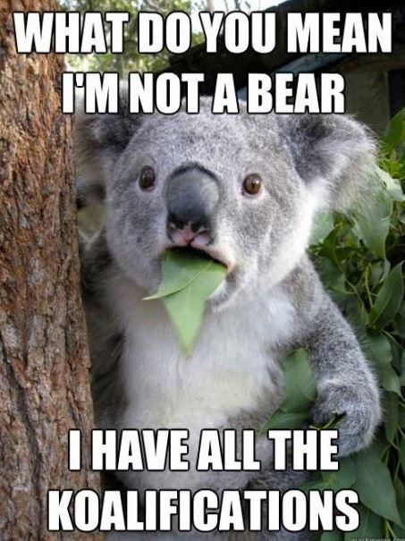 Koalifications...Memes,  Phascolarcto Cinereus,  Native Bears, Funny Stuff, Koala Bears, Humor,  Koalas Bears, Funny Animal,  Kangaroos Bears