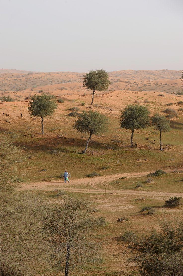 Keidas aavikolla, Dubain naapurissa  Salaperäinen usva kieppuu unisen autiomaan yllä. Hiljalleen nouseva aurinko näyttää kuulta, yhtä himmeältä ja tarkkarajaiselta. Vähän kauempana pari gasellia nyhtää heinää.  Aamulenkissä autiomaan tyhjyydessä on aivan erityistä hohtoa – varsinkin, kun sen jälkeen voi kiivetä korkean dyynin päälle joogailemaan, tai tuumailemaan.  http://www.exploras.net/uudet-tekstit/#/keidas-aavikolla-dubain-naapurissa/