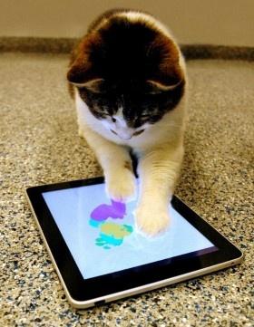 LA shelter hopes cats' iPad art draws in donations