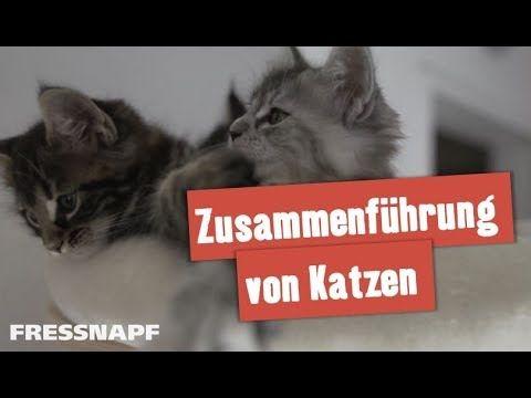 19 besten Cat Paradise Bilder auf Pinterest | Die katze, Hund katze ...