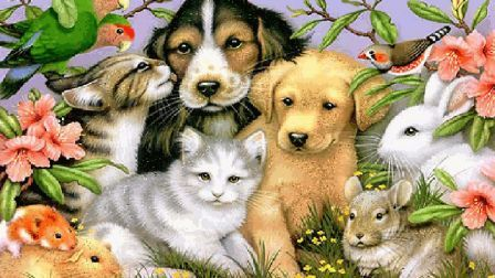 Sweet pets beagle bunny kitty puppy hamster HD Wallpaper