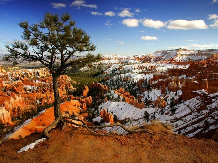 """Uma árvore solitária na beira do precipício, no Parque Nacional """"Bryce Canyon"""", Utah, EUA."""