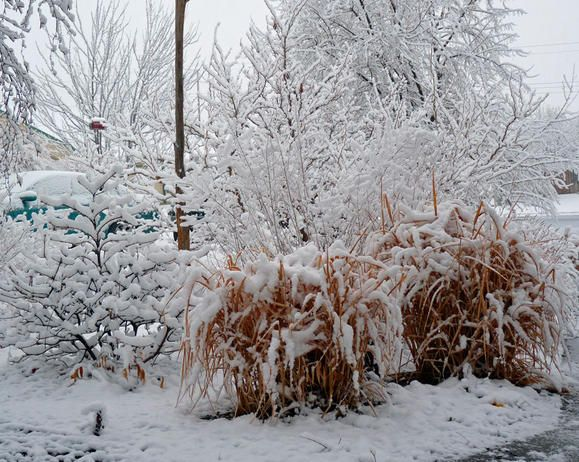 Six winter garden chores cleaning up the garden for Garden design winter 2018