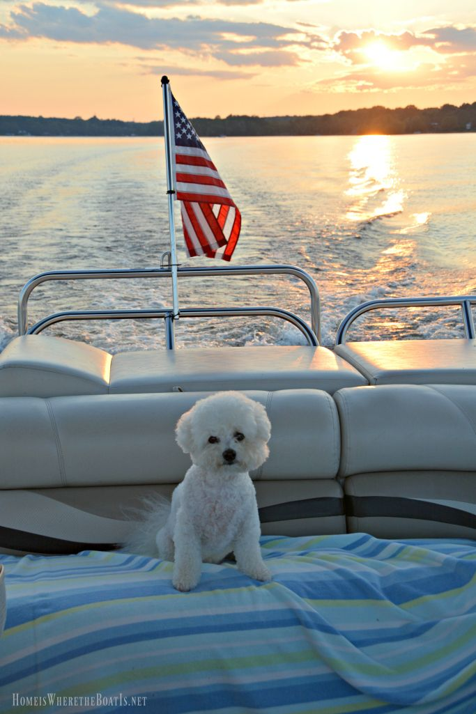 Boating with dogs Lake Norman | Homeiswheretheboatis.net