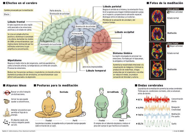 La meditacion puede provocar cambios considerables en las estructuras del cerebro – Barcelona Alternativa
